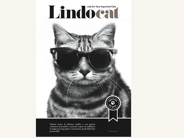 Kedi Kumları | Lindocat